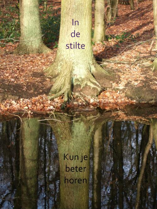 Een boom, weerspiegeld in het stille water.